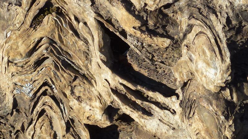 2.95-billion-year-old fossil stromatolite of the Pongola Supergroup